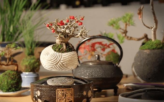 magichesko-dravche-bonsai-koeto-vitae-vav-vazduha-4G